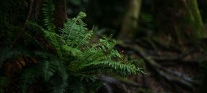 Fern - Milford Sound - New Zealand
