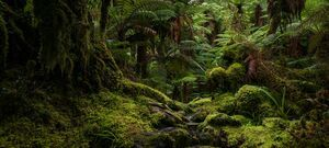 Rainforest Track - Tutoko River - Milford Sound - New Zealand